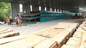 盛怀单板烘干机在柬埔寨正式投产运行